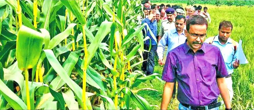 DM Md.Sohail inspecting maize crops field in different blocks of Madhepura district.