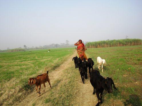 Farmers challenges in Bihar