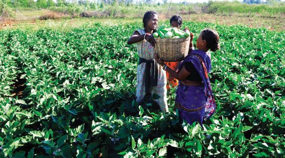 Madhepura's mini-chambal Tengraha Village turned in Land of Greenary