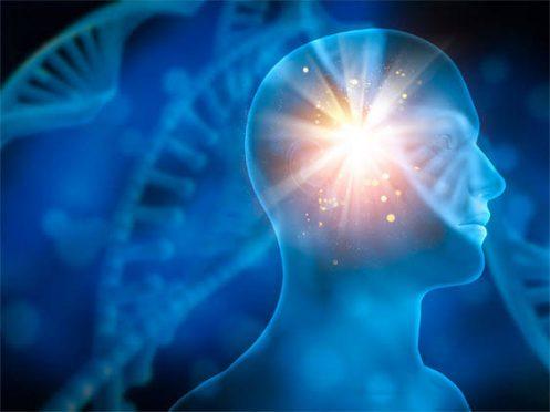 Enlighten brain